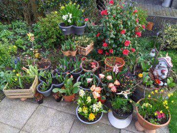 bloemen-tuin